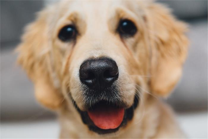 Livability Research Gives Pets Top Priority at Home